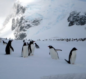 Antartica Expedition Budget Holidays
